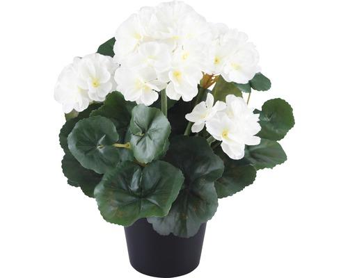 Géranium dans un pot H 25 cm blanc
