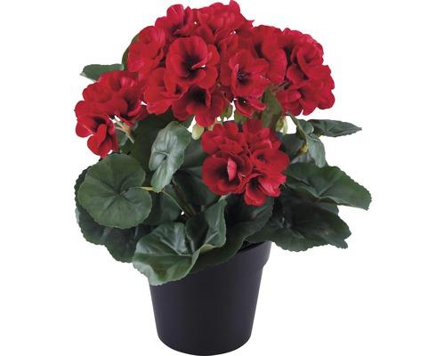 Géranium dans un pot h25cm rouge
