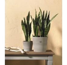 Pot de fleurs Soendgen Dover, céramique, Ø 15 H 13 cm, gris sable-thumb-1