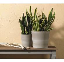 Pot de fleurs Soendgen Dover, céramique, Ø 15 H 13 cm, gris sable-thumb-2