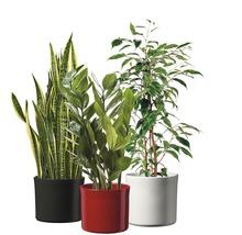 Pot de fleurs Soendgen Miami céramique Ø 13 H 11 cm blanc-thumb-2