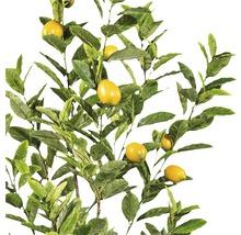 Plante artificielle citronnier H180cm-thumb-1