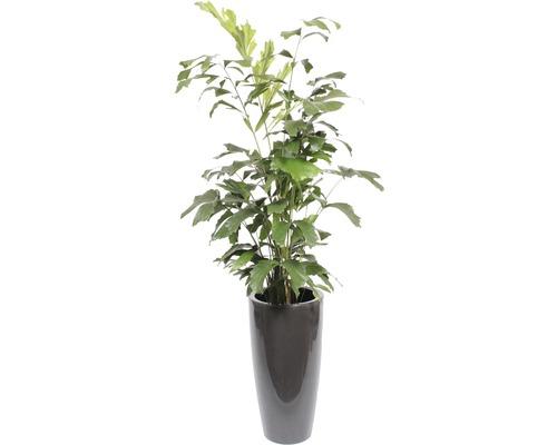 Plantes vertes plantes de bureau