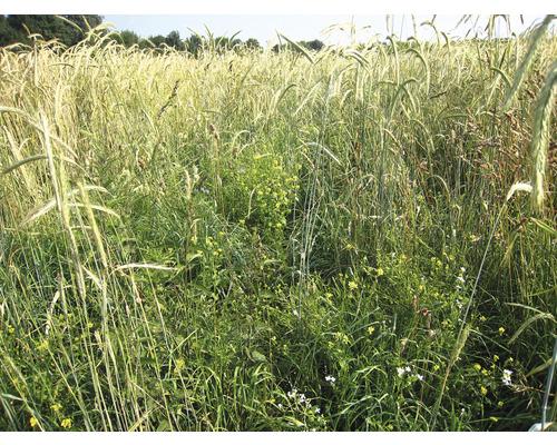 Prairie sauvage Kiepenkerl mélange de protection de la faune WSM 2 10 kg