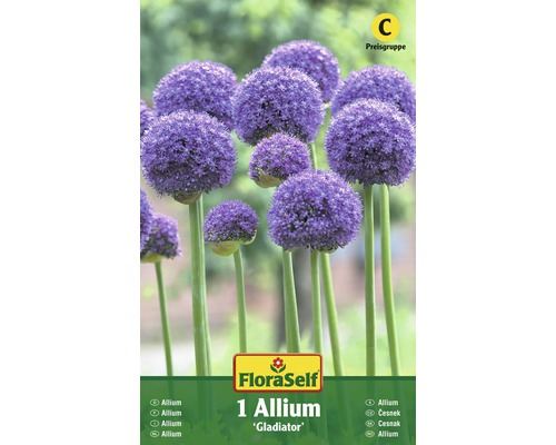 Bulbes FloraSelf ail d''ornement ''Gladiator'' lilas