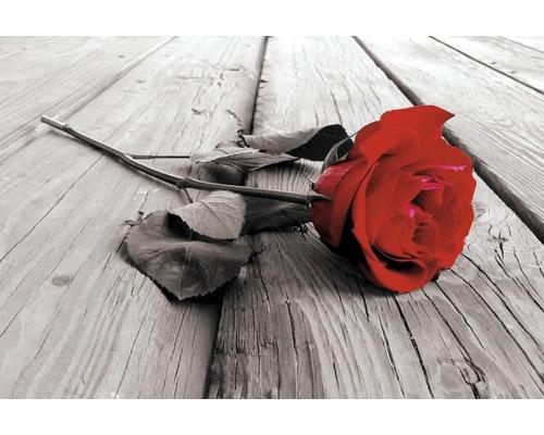 Panneau décoratif Red Rose 61x91 cm