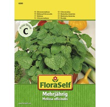 Mélisse citronnelle, semences de fines herbes FloraSelf®