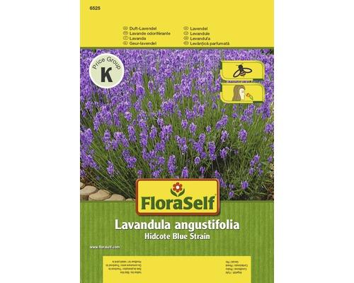 Lavande Hidcote Blue Strain ''Lavandula angustifolia'' semences de fleurs FloraSelf®