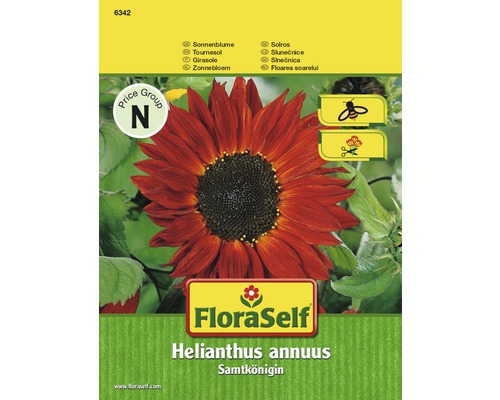 Tournesol Reine de velours ''Helianthus annuus'' semences de fleurs FloraSelf®