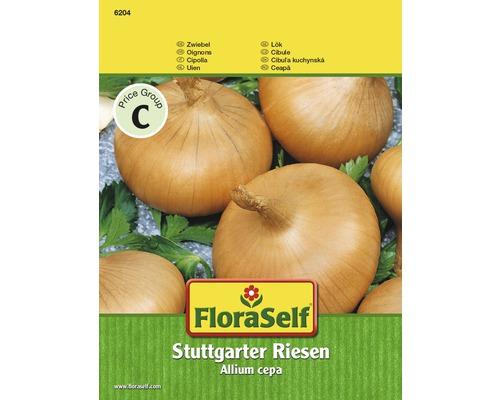 Oignon de Stuttgart semences de légumes FloraSelf®