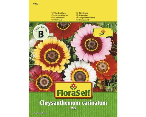 Chrysanthème tricolore, Mélange ''Chrysanthemum carinatum'' semences de fleurs FloraSelf®
