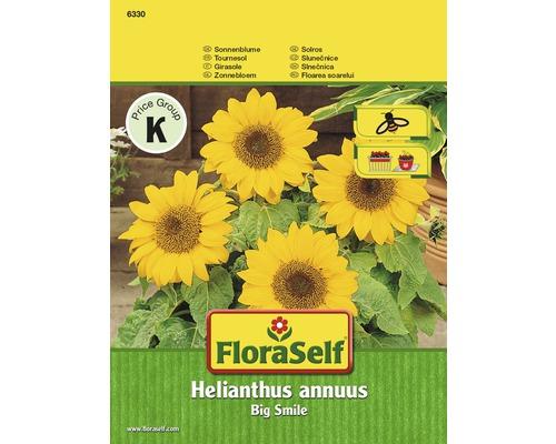 Tournesol Big Smile ''Helianthus annuus'' semences de fleurs FloraSelf®