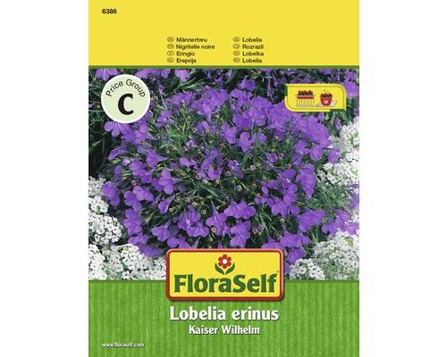 Lobélie érine Empereur Guillaume ''Lobelia erinus'' semences de fleurs FloraSelf®