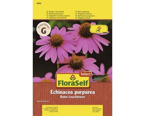 Echinacée pourpre ''Echinacea purpurea'' semences de fleurs FloraSelf®