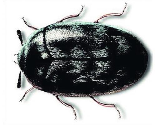 Spray pour insectes volants Protect Home Blattanex 400 ml