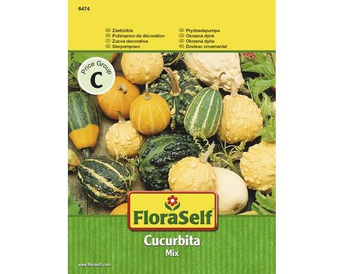 Potimarron de décoration ''Cucurbita pepo'' semences de fleurs FloraSelf®
