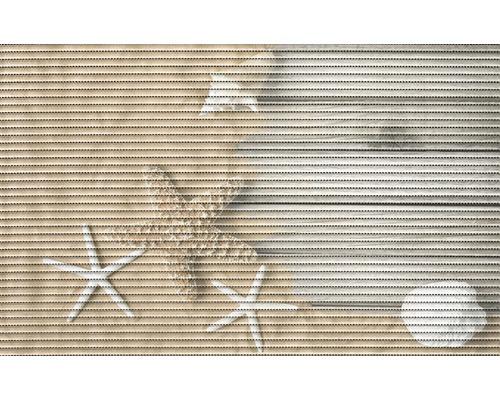 Universalmatte Starfish 50x80 cm