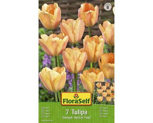 Bulbes FloraSelf tulipe Single Early ''Apricot Foxx'' orange 7pces