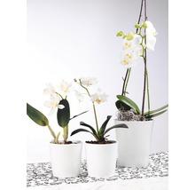 Pot de fleurs Soendgen Merina, céramique, Ø 14 H 15 cm, blanc-thumb-1