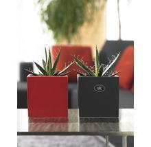 Pot de fleurs Soendgen Latina, céramique, 13x13x13 cm, anthracite-thumb-1