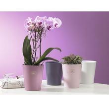 Vase à orchidées ceramique Soendgen Merina Ø 14 cm, fuchsia-thumb-1