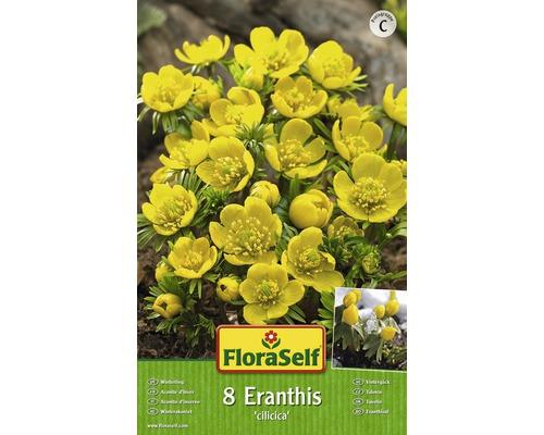 Bulbes FloraSelf Winterling ''Cilicica'' jaune 8pces