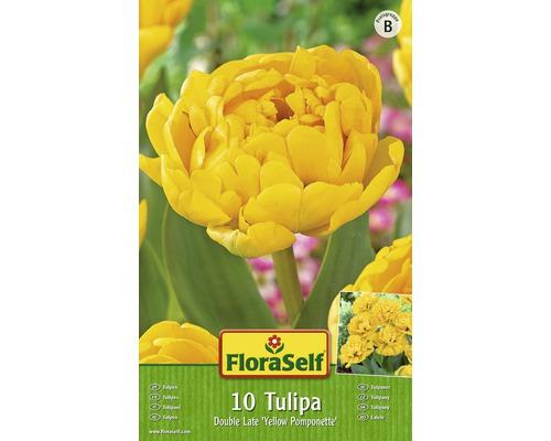 Bulbes FloraSelf tulipe Double Early ''Monte Carlo'' jaune 10pces
