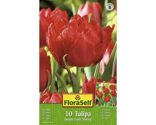 Bulbes FloraSelf tulipe Double Early ''Abba'' rouge 10pces