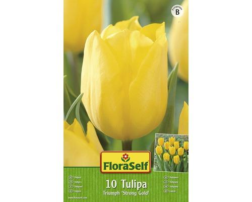 Bulbes FloraSelf tulipe ''Golden Apeldoorn'' jaune 10pces