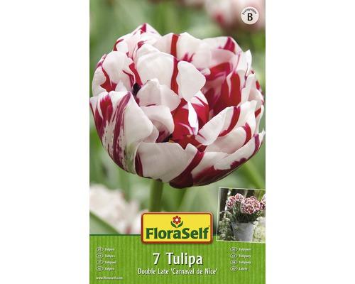 Bulbes FloraSelf tulipe Double Late ''Carnaval de Nice'' blanc 7pces
