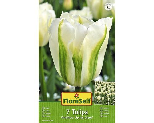 Bulbes FloraSelf tulipe Viridiflora ''Spring Green'' blanc-vert 7pces