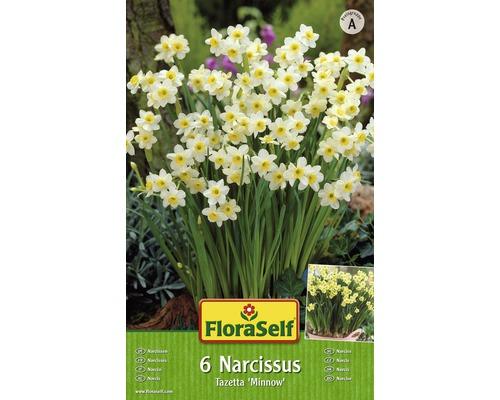 Bulbes FloraSelf narcisse Tazetta ''Minnow'' blanc-jaune 7pces