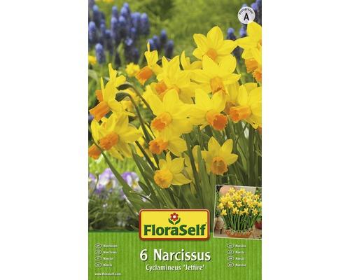 Bulbes FloraSelf narcisse Cylclamineus ''Jetfire'' jaune-orange 7pces