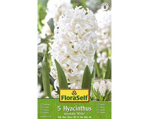 Bulbes FloraSelf hyacinthe ''Orientalis'' blanc 5pces