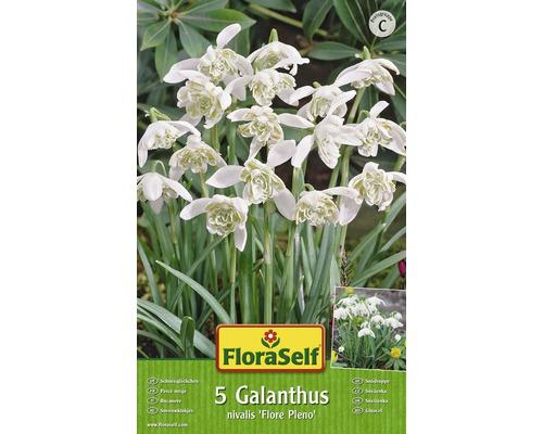 Bulbes FloraSelf perce-neige ''Flore Pleno'' blanc 5pces