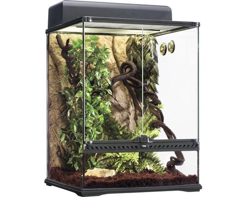 Kit de terrarium climat forêt équatoriale Exo Terra Habitat Kit taille M