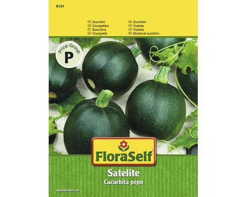 Courgette Satelite Semences de légumes FloraSelf®
