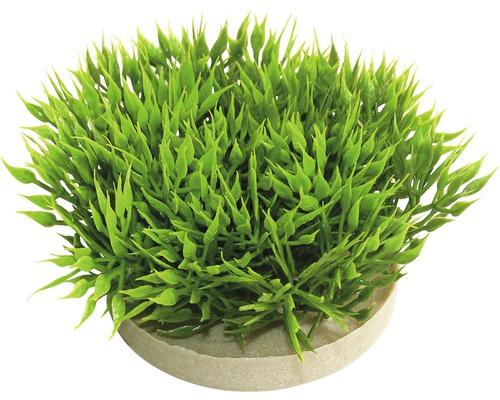 Sydeco Plante en plastique Green moss 7 cm