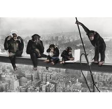 Poster The Chimp - Girder 61x91,5 cm-thumb-0