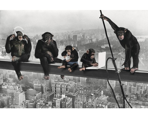 Poster The Chimp - Girder 61x91,5 cm-0
