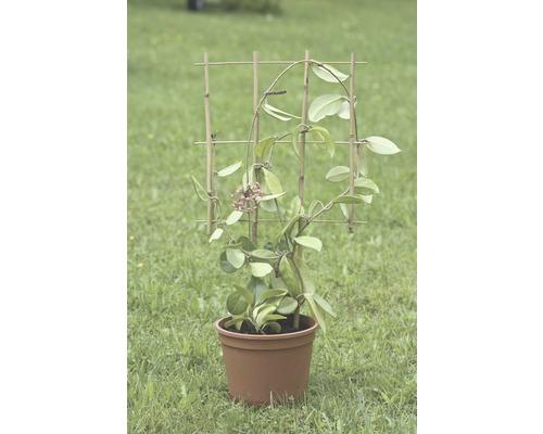 Tuteur pour fleurs FloraSelf® 36xH 77 cm, brun