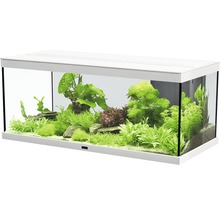 aquarium aquatlantis style l