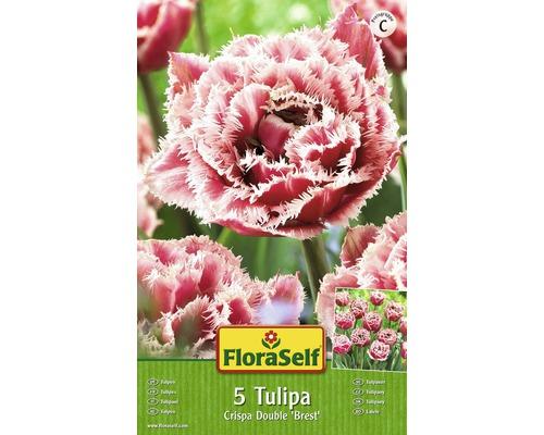 Bulbes FloraSelf tulipe Crispa Double ''Crispion Sweet'' rose 5pces