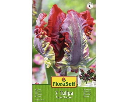 Bulbes FloraSelf tulipe Parrot ''Rococo'' rouge 7pces