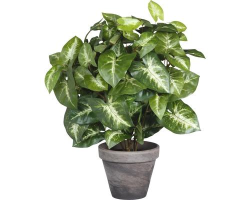 Plante artificielle Fittonia hauteur 35 cm, vert