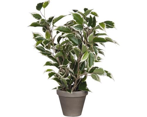 Plante artificielle Ficus natasja, vert-multicolore