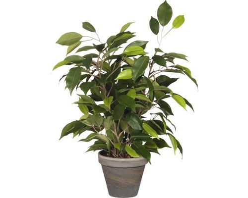 Plante artificielle Ficus natasja, vert