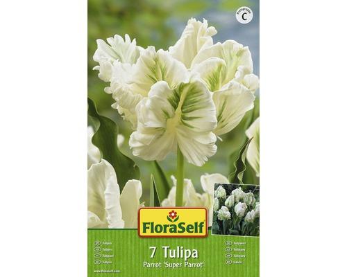 Bulbes FloraSelf tulipe Parrot ''Super Parrot'' blanc 7pces