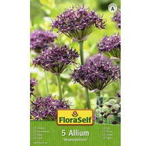 Bulbes FloraSelf ail d''ornement Allium Atropurpereum 5pces-thumb-0