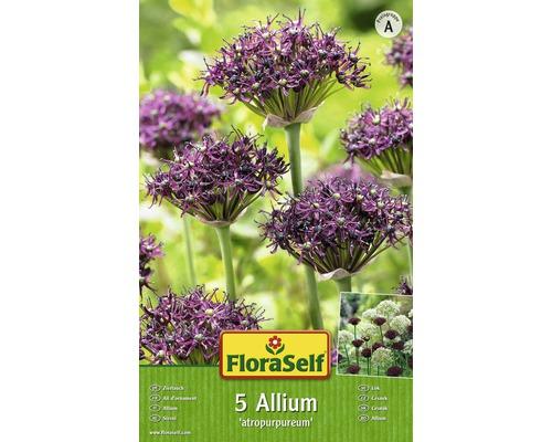 Bulbes FloraSelf ail d''ornement Allium Atropurpereum 5pces-0